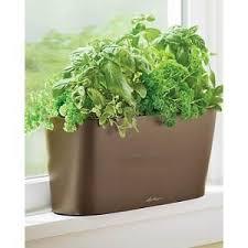 herbs planter amazon com windowsill self watering planter espresso window