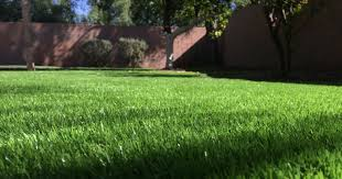 allhands shouldn u0027t artificial grass be more of a thing in arizona
