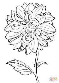 dahlia u0027marguerite clark u0027 coloring page free printable coloring