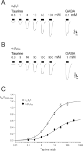 taurine is a potent activator of extrasynaptic gabaa receptors in