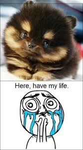 Cuteness Overload Meme - 89 best cute animals images on pinterest cute funny animals