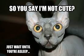 Crazy Cat Meme - so you say i m not cute just wait until you re asleep crazy