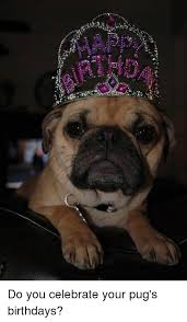 Pug Birthday Meme - 六rf yary say do you celebrate your pug s birthdays birthday meme