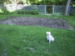 vegetable garden fence ideas back yard fencing for dogs for