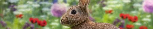 rabbit banner how to keep rabbits at bay