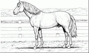 fantastic realistic horse coloring pages with free horse coloring