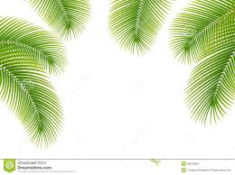 leaves of palm tree on white background stock photo image 28078800