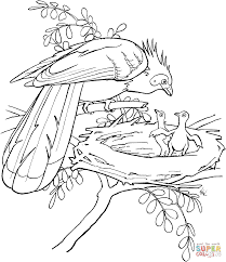 roadrunner bird coloring page free printable coloring pages