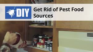 how to clean cupboards after pest how to get rid of roaches kill cockroaches domyown