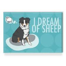 australian shepherd illustration australian shepherd art print i dream of sheep red merle