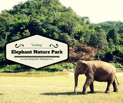 South Carolina is it safe to travel to thailand images Visiting elephant nature park in chiang mai thailand buddy the png