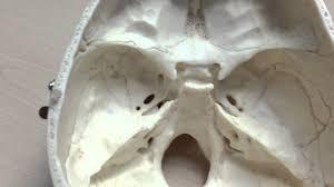 Base Of The Skull Anatomy Anatomy Of The Cranial Base Youtube