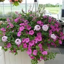 flower baskets outdoor hanging flower baskets in hermitage tn in bloom