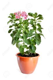 flower pot plant 64 enchanting ideas with colorful gerber plants