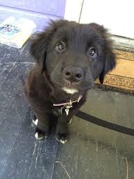Puppy Eyes Meme - 27 puppies who are too cute to be real puppy dog eyes dog and eye