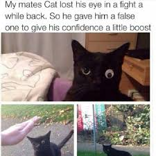 Lost Cat Meme - lost his eye in a fight funny cat pictures