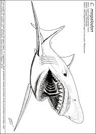 megalodon coloring pages megalodon shark step step dinosaurs