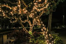 Landscape Tree Lights Outdoor Landscape Lighting Lighting Denver My Landscaper Llc
