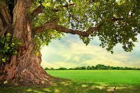 tree pictures images and stock photos istock