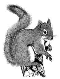 How To Hunt Squirrels In Your Backyard by Tree Squirrels Living With Wildlife Washington Department Of