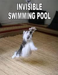 Dog And Cat Memes - invisible cat meme the trupanion blog