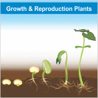 Reproduction In Flowering Plants - learnhive cambridge checkpoint grade 8 science reproduction in