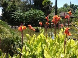 Williamstown Botanic Gardens Flowers In Garden Picture Of Williamstown Botanic Gardens