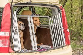 porta cani per auto trasporto cani in auto facciamo chiarezza digital