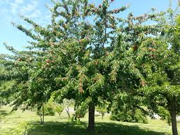 want a produce department add fruit trees to your yard all