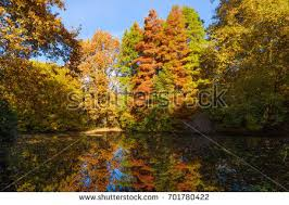 background autumn leaves autumn background stock photo 697681822