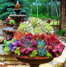 200 best colorful succulents cactus images on plants