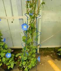 Support For Climbing Plants - diamond plant supports galvanized or powder coated