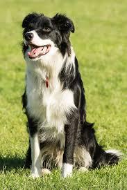 dog walking service in northampton great rates u0026 professional
