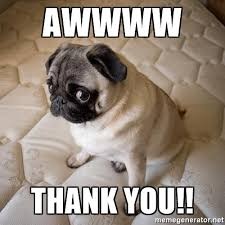 Thank You Funny Meme - funny pic dog thank you funny pics story
