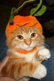 Kitten Halloween Costumes Pet 108 Costume Cat Images Animals Kitty Cats