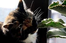 plants toxic to cats plants that are poisonous to cats