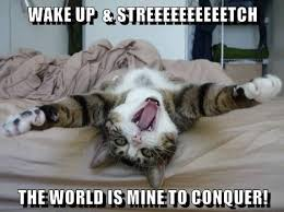 Morning People Meme - lolcats wake up lol at funny cat memes funny cat pictures
