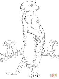 meerkat and flowers coloring page free printable coloring pages