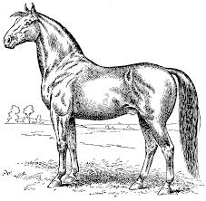 vintage horse coloring page free clip art