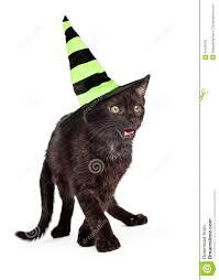 black cat wearing halloween witch hat cute little eight week old