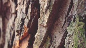 free picture brown macro texture environment