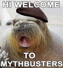 Walrus Meme - today s myth jamie hyneman is actually a walrus animal capshunz