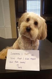 Funny Puppy Memes - weekend wit cute pet memes