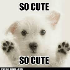 So Cute Meme - 1518016321539 png