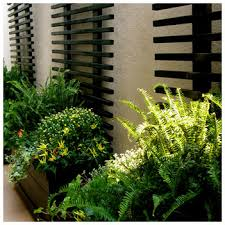 wall trellis design beautiful love the contrast with the black design the plants and