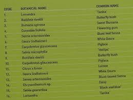 13 succulents that are native australian succulents do butterflies like succulents