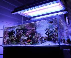 Fluval Sea Marine And Reef Led Strip Lights by 238 Best Marine Aquarium Images On Pinterest Marine Aquarium