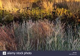 rhs wisley surrey design piet oudolf prairie planting with grasses