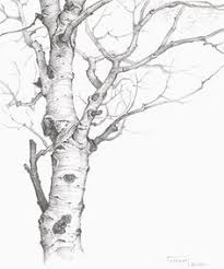 birch pencil drawing google search tatuering pinterest