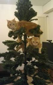 the 25 days of catmas iz ur faeborit ornamint tree